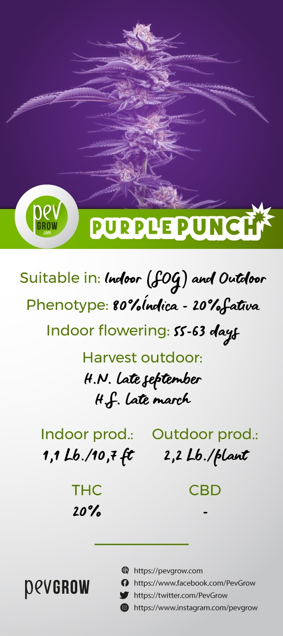 Characteristics of the variety Purple Punch*.