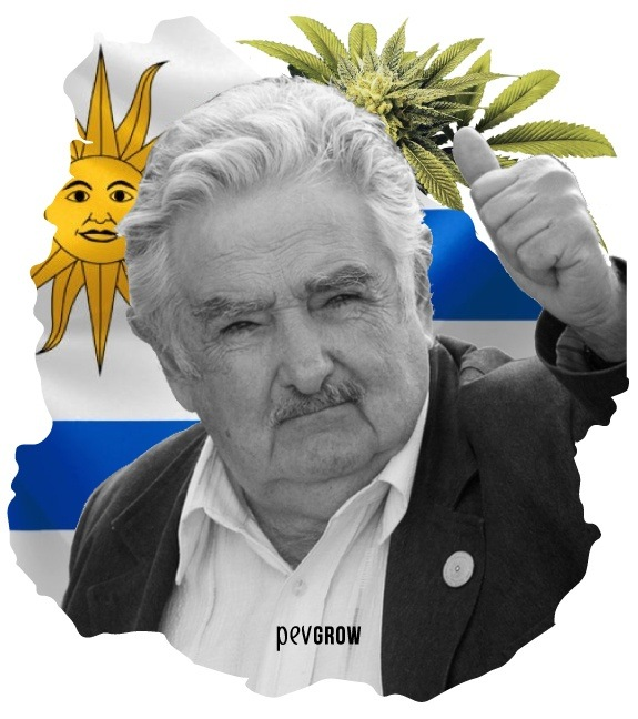 Picture of Pepe Mujica, the great promoter of the cannabis legalization in Uruguay*