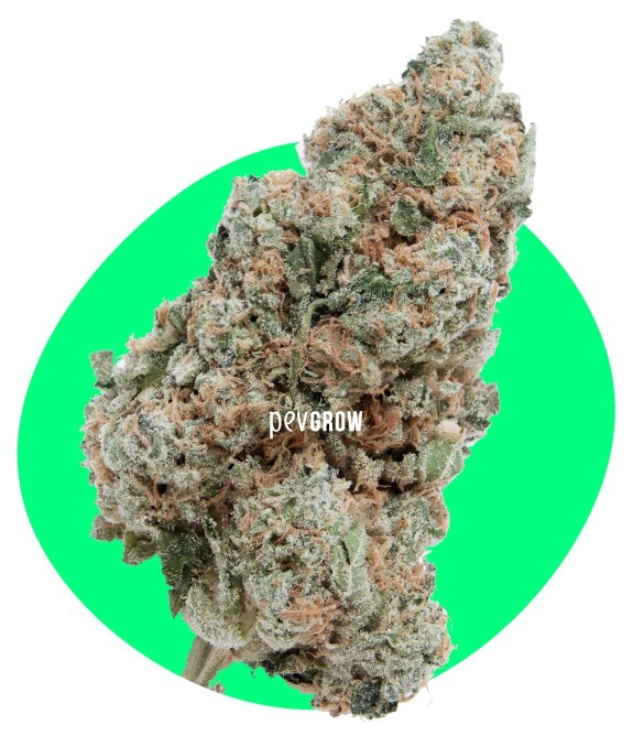 Photograph of Wedding Cake weed where you can appreciate its delicious appearance*