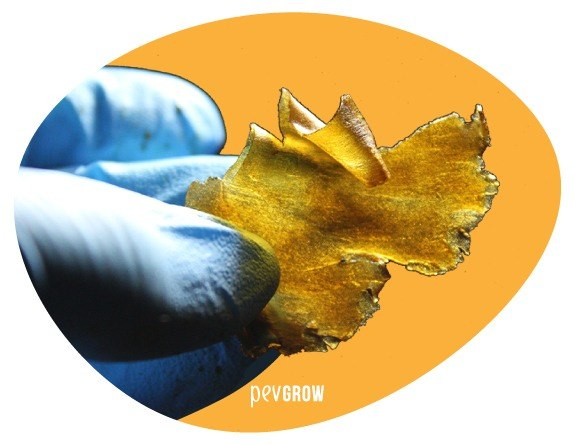 Image of a sample of Rosin from Cookies that shows an incredible transparency