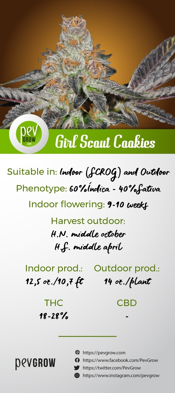 Infographic with the characteristics of the Girl Scout Cookies variety*