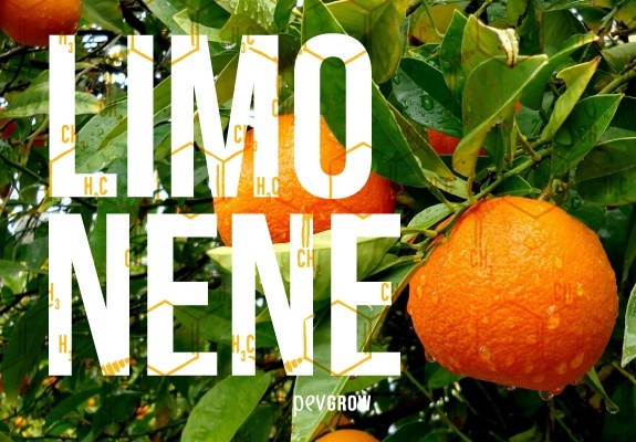 A border of chemical structures of limonene are superimposed on a picture of citrus