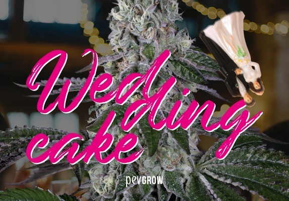 Wedding Cake, bridal weed for special occasions