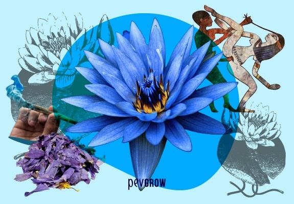 Photo of a lotus flower surrounded by its uses and effects in images