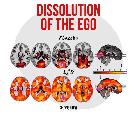 """Image that shows in a scientific way the """"dissolution of the ego""""*"""