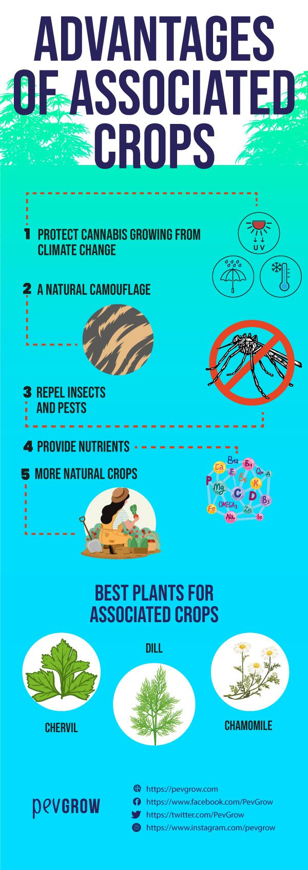 Image on the benefits of intercropping