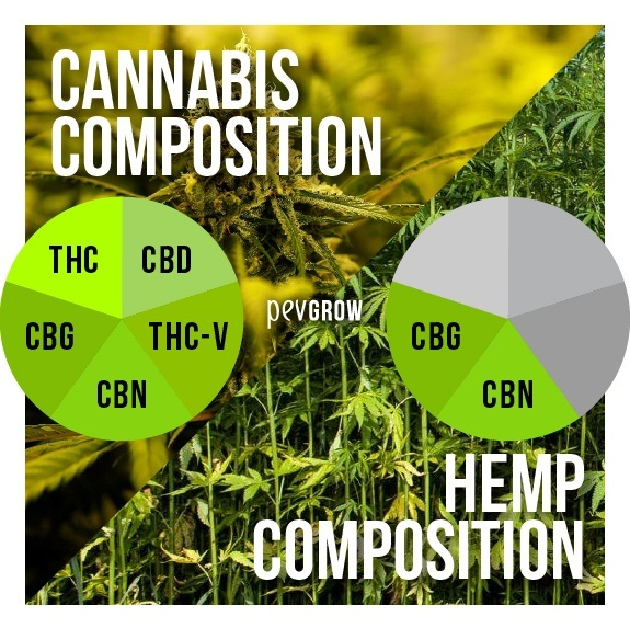 Image of hemp and cannabis to make a contrast between the two