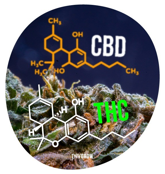 Image showing CBD and THC molecules*